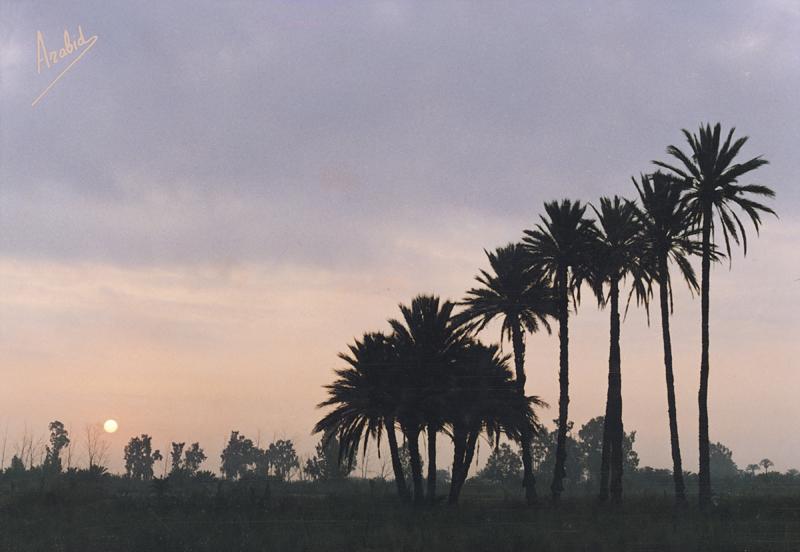 08 PALMERAS EN EL HONDO